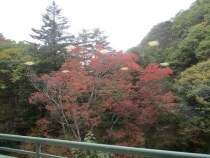 三才山の木々